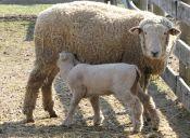 Video: Animales de la granja viven en plena felicidad