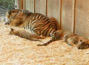 Los animales tiernos, aumentan tu productividad