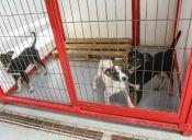 Los Ángeles está sobre poblado de perros abandonados