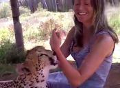 [Video] Bestias salvajes disfrutan de un arriesgado masaje