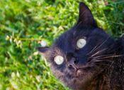 El gesto del gato pasmado, tiene una razón científica