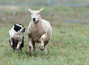 Ministerio de Agricultura suspendió decreto que permitía cazar perros bravos en zonas rurales