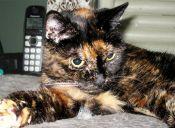 Tiffany Dos, la gata más longeva del mundo