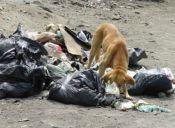 Puntarenenses asumen irresponsabilidad en tenencia responsable de mascotas