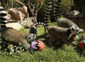Animales del Buin Zoo celebran pascua de resurrección