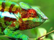 Conoce los animales exóticos que están permitidos por la ley chilena