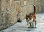 Traducción de idioma Gatuno: El porqué levantan la cola cuando se les acaricia la espalda