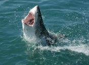 Video: Tiburón le roba a pescador
