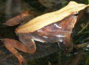 Zoológico Nacional inaugura un nuevo espacio dedicado a los anfibios