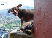 Perros callejeros serán resguardados durante la Maratón de Santiago