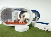 Video: La moderna casa de perros que hizo Samsung