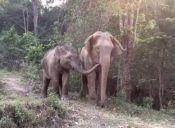 Video: Madre elefante se reencuentra con su hijo