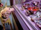 Abren en Berlín el primer restaurante para perros y gatos