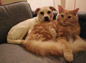 Video: Dos cachorros acaban con la paciencia de un gato