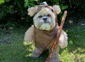 [Video] Este perro se postula el próximo episodio de Star Wars
