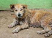 Los perros de Birmingham son abandonados por falta de recursos