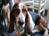 Aprende a identificar los problemas emocionales de tu mascota