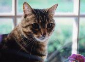 ¿Son los gatos más independientes que los perros?
