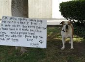 Katy busca desesperadamente una familia que la quiera