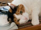 [Video] 7 razones para adoptar un gato