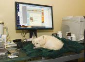Empresas permiten que empleados lleven a sus mascotas al trabajo