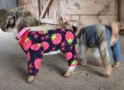[Video] Dos cabras en pijama que harán que aflore toda tu ternura
