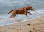 Los perros de Barcelona quieren ir a la playa