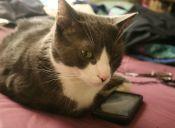 Podrás tener todos los datos de tu mascota en tu teléfono
