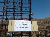 Se paraliza obra de construcción para preservar nido de picaflores