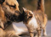 Elegir entre perros y gatos puede reflejar tu personalidad
