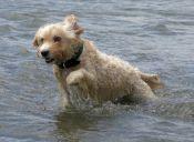 Más perros podrán entrar a las playas de España