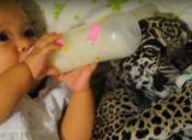Dos pequeños comparten la hora de la mamadera (video)