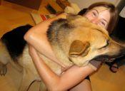 A los perros no les gustan los abrazos