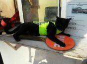 Black, el gatito guardia de una construcción, usa su propio chaleco reflectante