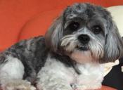 [Video] Este perro nunca se esperó que este objeto lo atacara