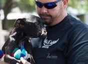 Por culpa de los maltratos, esta pitbull terminó con todo su rostro desfigurado
