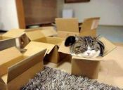 [Fotos] Los gatos aman las cajas aunque no quepan