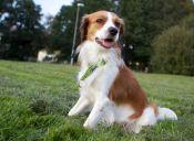 Los perros se guían más por la memoria que por el olfato