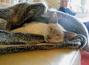 6 consejos para evitar que tu gato se resfríe