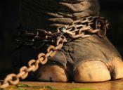 ¿Por qué cada vez más países están prohibiendo los circos con animales?