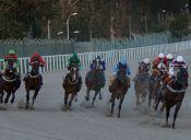 El SAG tuvo que sacrificar a 36 caballos de carrera que portaban el Muermo
