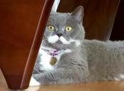 [Fotos] Citronella, la gata con los bigotes perfectos