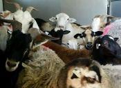 Cientos de vidas salvadas en el operativo de rescate animal más grande de la historia de Estados Unidos