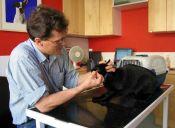 Perros y gatos de Ovalle tienen que ser vacunados contra la rabia