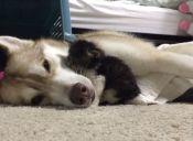 [Video] Lilo, la perrita que adoptó a una pequeña gatita