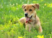 5 plantas que pueden afectar a tu mascota