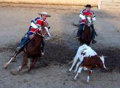 Animalistas marcharán en contra el Rodeo