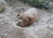 Un perro fue enterrado vivo en Francia