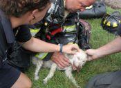 Bomberos de Estados Unidos revivieron a un perro asfixiado en incendio
