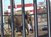 Protesta nacional por liberación de elefanta Ramba